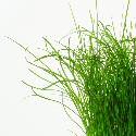 grassheight